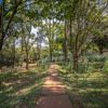 trilha-do-bosque-do-poção-em-brotas